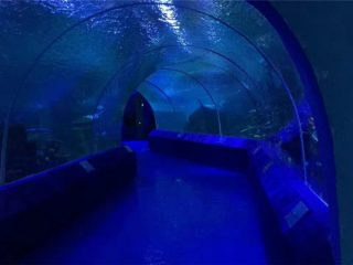 180 atau 90 Derajat Panel Akrilik untuk Terowongan Akuarium
