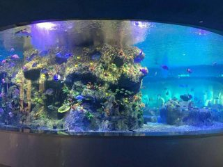 pasokan pabrik mangkuk ikan, akuarium tangki kaca bundar
