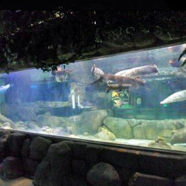 Disesuaikan desain mewah bawah air tebal panel akrilik jendela akuarium lembaran kaca