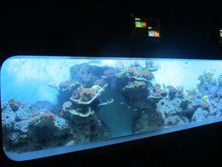 Artificial Cast Acrylic Silinder Aquarium ikan transparan / tampilan jendela