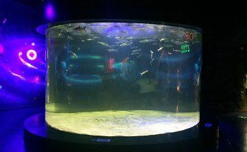 Tangki ikan akrilik