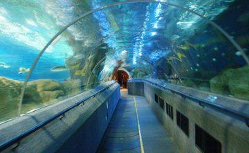Terowongan akrilik