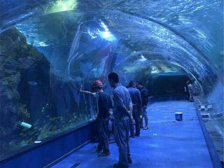 Proyek oceanarium terowongan akrilik di akuarium umum