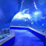 Clear pmma acrylic terowongan plastik besar akuarium