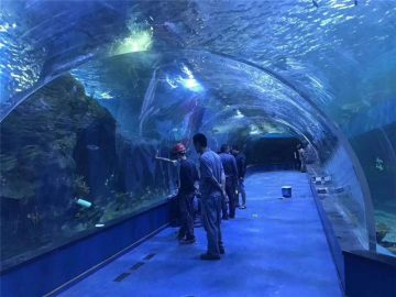 Terowongan akrilik akrilik plexiglass kustom
