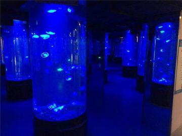 tangki akuarium ubur-ubur akrilik
